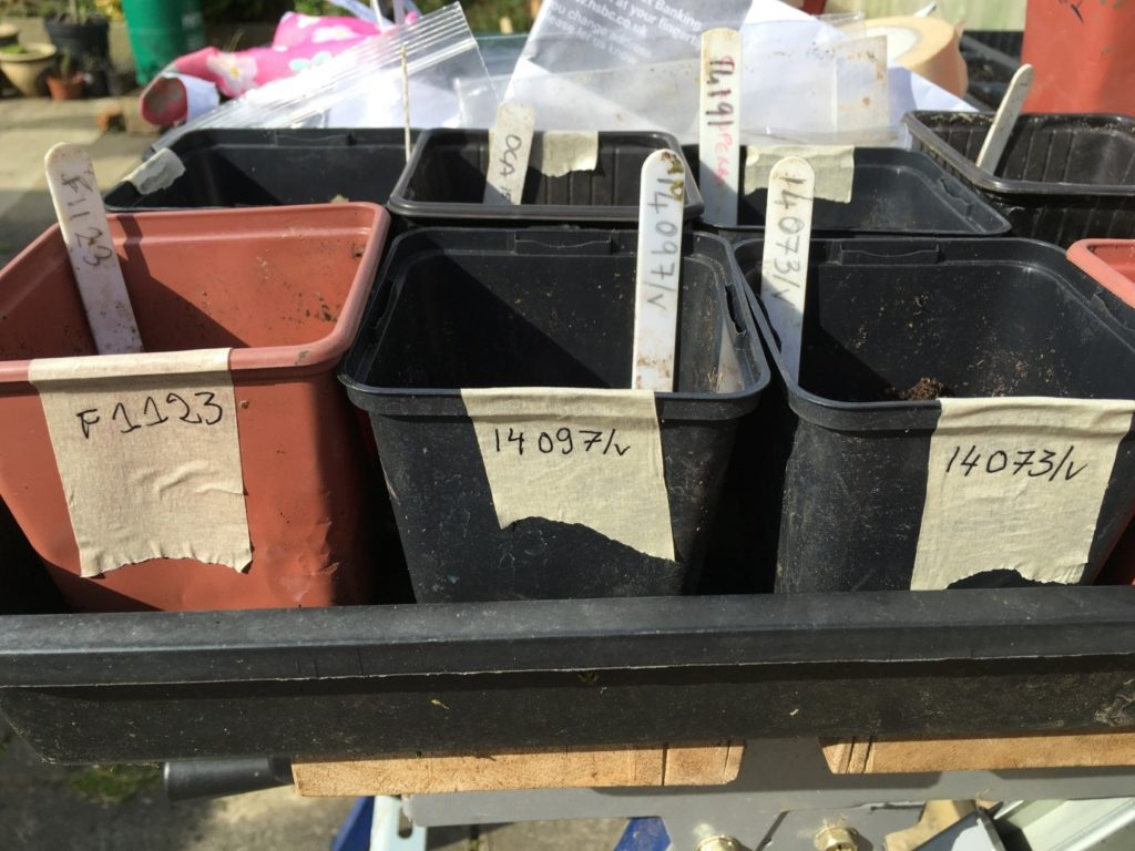 double labelling pots